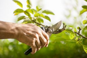 Pruning your life