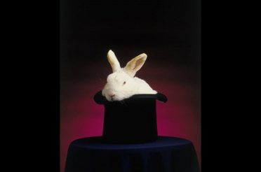 The Rabbit and The Hat