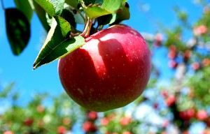red_apple621